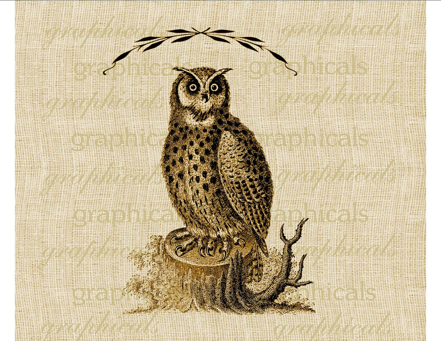Screech Owl Clip Art Black And White Great horned owl brown bird