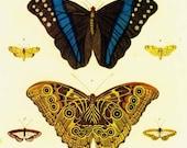 Butterfly Tiger Moth South American Insects Seba Entomology Natural History Bug Lithograph Chart Poster Print