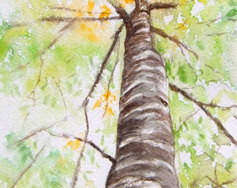 Tree Painting Beech Giclee print from original Watercolor l Painting Fall Autumn Forest Fall Bay View Michigan