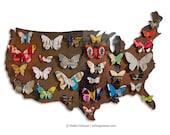 American Butterflies Metal Wall Art