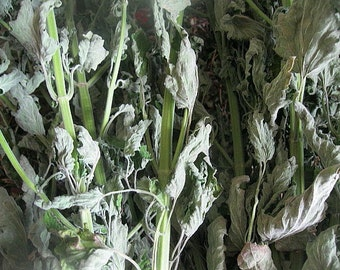 CATNIP naturally DRiED herb  STEMS