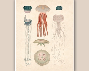 Jellyfish Print 2, Print 8'x10',  Study of natural history, Marine Wall Decor, Nautical art,  Collage  Print, Coastal Living, shabby chic
