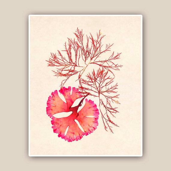 Seaweed Artwork Print,  Seaweed art Print, Print Pressed seaweed Art, in red, beach cottage decor, Wall Decor, Sea Grass Ocean, Nautical art