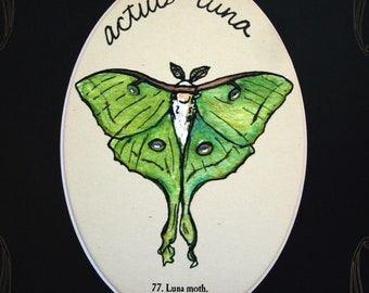8x10 luna moth print with custom mat