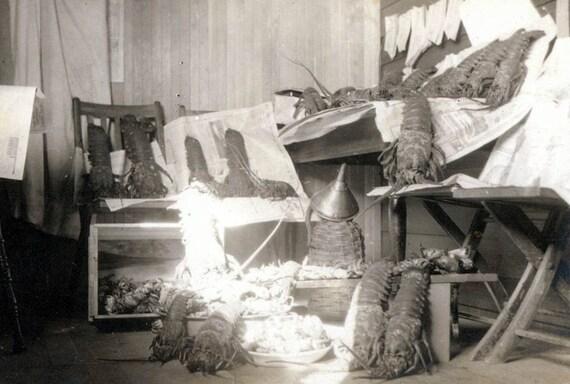 vintage photo Unusual Maine Lobster in Artistic Set up