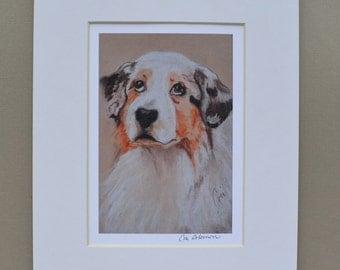 Aussie Australian Shepherd Dog Art Print Matted By Cori Solomon