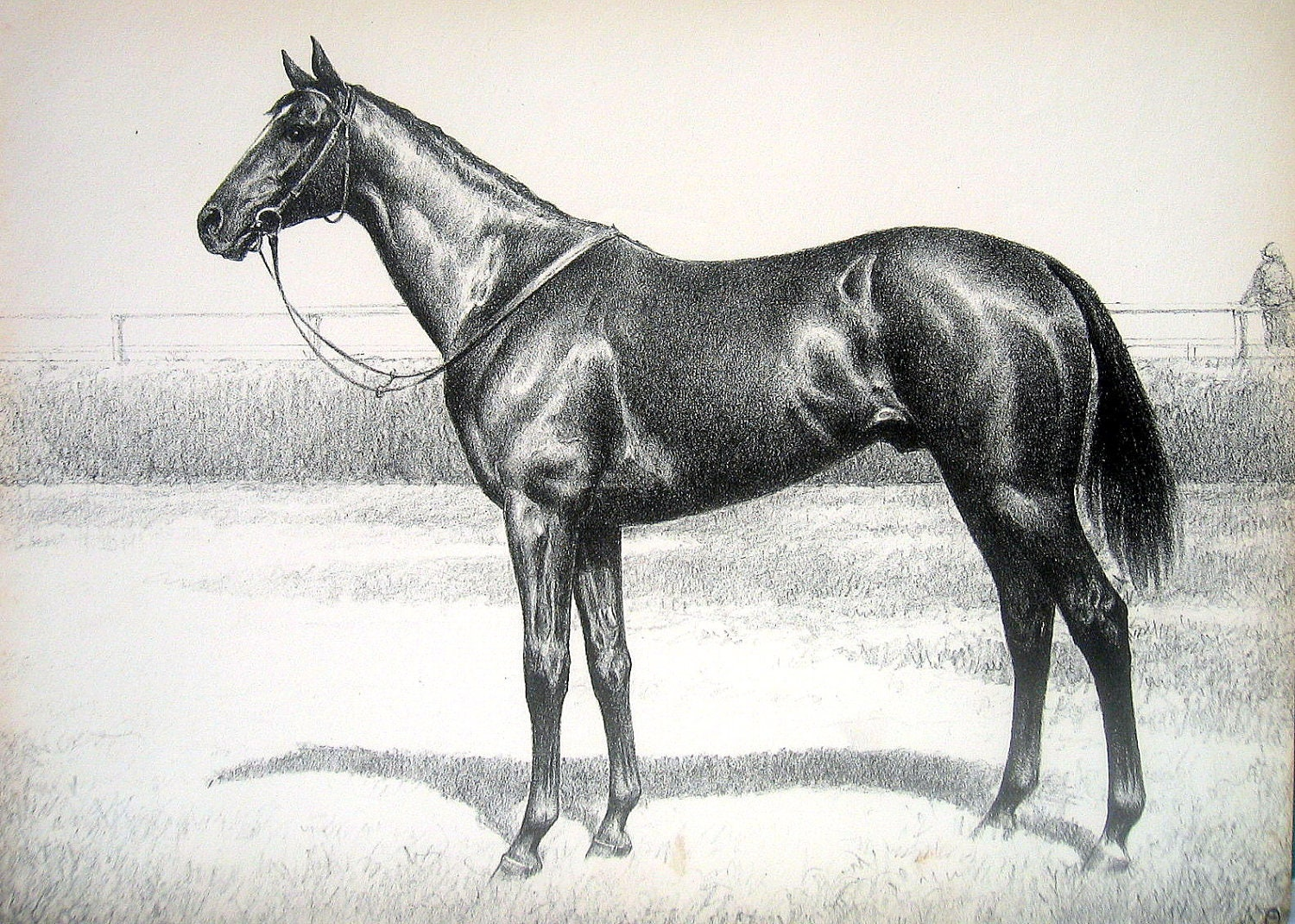 equipoise horse