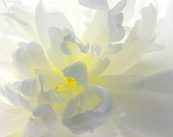 White Peony Photograph, Floral Art Print, Peony Wall Art, White Yellow Decor,  Peony Art, Flower Home Decor