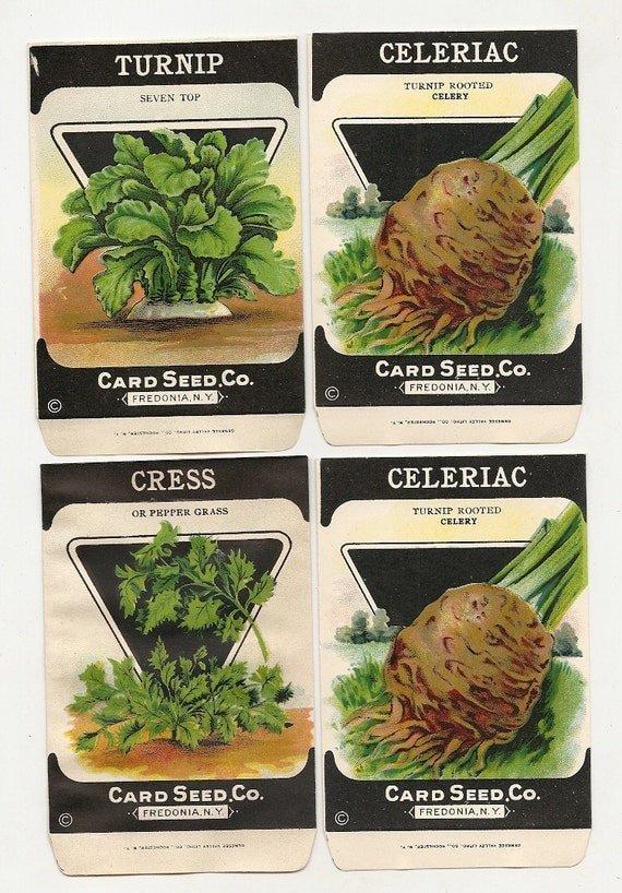 4 Old 1920s Card Seed VEGETABLE SEED PACKETS - Vegetables and herbs. Card Seed Co. Fredonia, New York.
