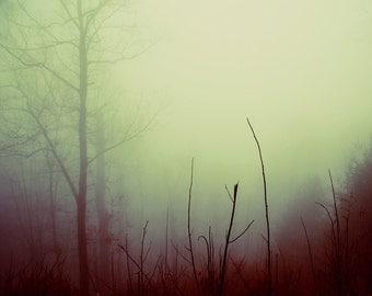 Dreamy Forest Photograph Tree Branches fog 8x10 print foggy misty autumn purple amethyst mint cream wall decor fine art