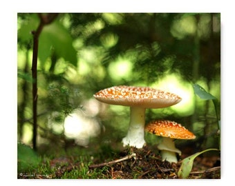 Mushroom Photograph Mushroom Print Affordable Home Photography Prints Nature Photography Decor Nature Lover Woodland Scene Fungi