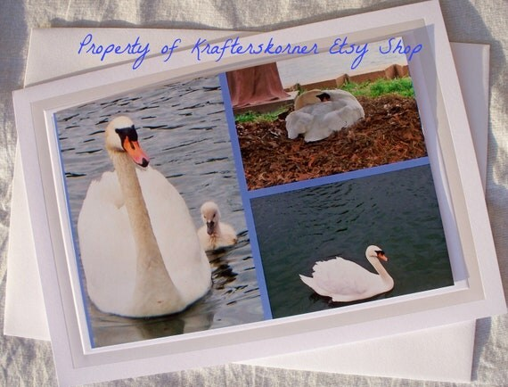 Swan Collage Photo Card, Mother on Nest, Father Swimming, Mother and Cygnant