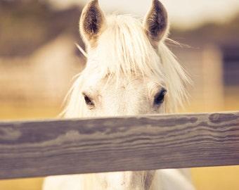 Horse photography, horse art, white horse, equestrian, horseback riding, dressage, beige, horse jumping, neutral decor, saddle