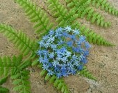 Blue Flower brooch - textile art, lacy machine embroidery on dissolvable fabric