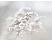 Winter Photography, white, wild flowers, snow, Snow Storm, natre fine art print 8x12 - moonlightphotography