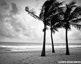 Beach Photography - Black and White,  Palm Trees, 20 x 30 Beach Decor, Tropical Theme, Original Photography by Jennifer Jackson