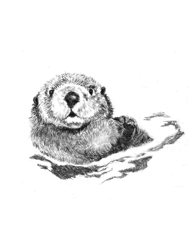 Otter Art Little Swimmer Otter Drawing  Otter Art Littl...