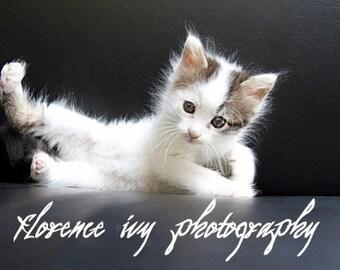Hello, Ladies. Fine Art Kitten Portrait