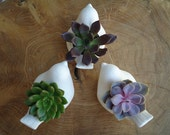 6 Christmas Dove Succulent Favors and Tags for Your Holiday Table or Gifting