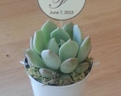 Sample Succulent Favor, Succulent Rosette and Silver Tin Pail/Bucket