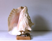 Vintage Conch Shell  lamp Seashell art Kitch folk art Night light piece