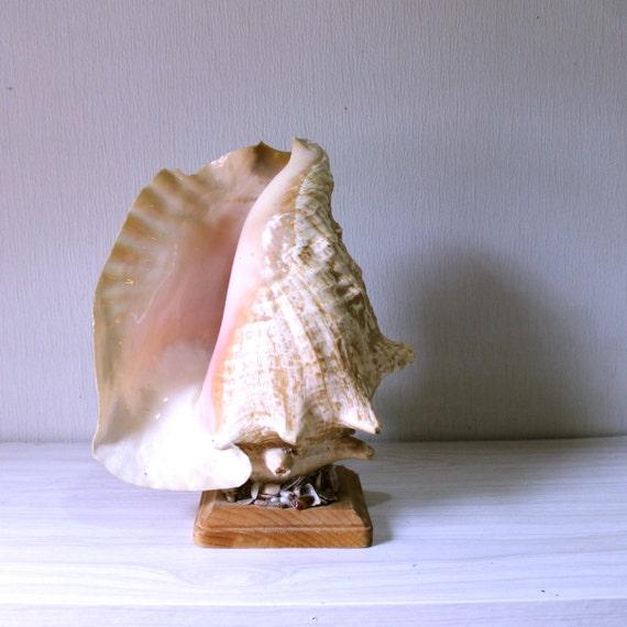 Vintage seashell tv lamp