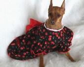 Black Cherries Dog Dress