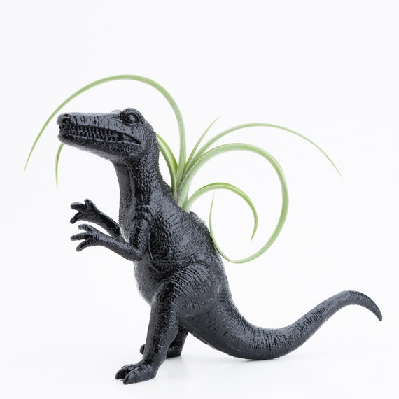 Large Dinosaur Planter with Air Plant Room Decor, College Dorm Ornament black, Tillandsia plant pot
