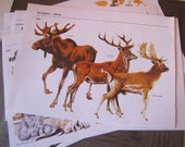 Pack of 10 Animal Nature  Dictionary Illustrations Images Vintage Paper Collage Pack