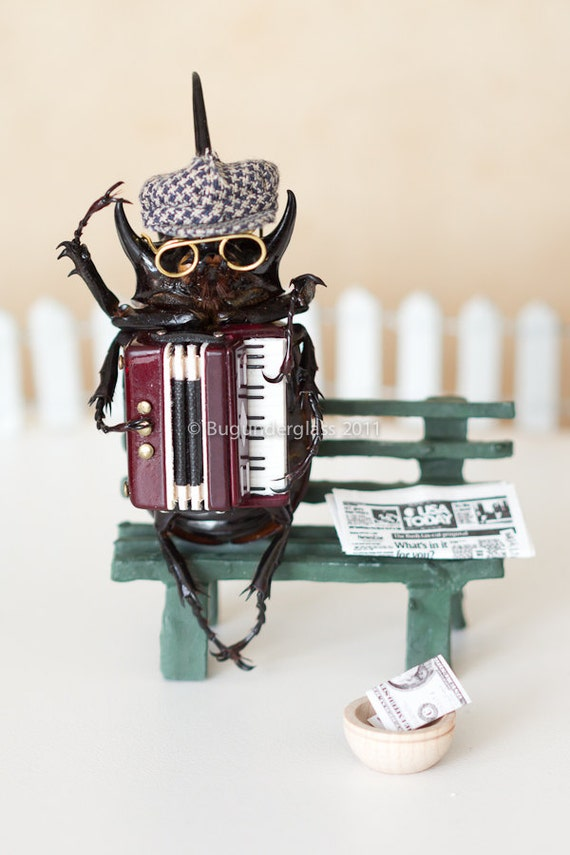 Insect Art Print Beetle Playing Accordion 5x7