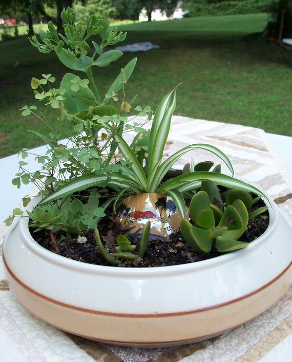 Container Garden Low Planter Asian Stylings Jade Spider Chick & Hen Wild Shamrock Handpainted Japanese Reduced