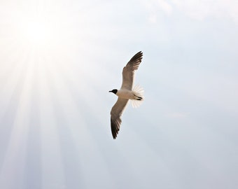 Animal Photography, bird photo, nature minimal minimalist flying, pale blue sky, sun rays, white, summer light wall art home decor for her