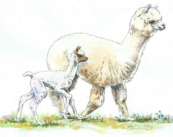 ALPACA & CRIA RUN Original Watercolor on ink print 11x14 Matted Ready to Frame