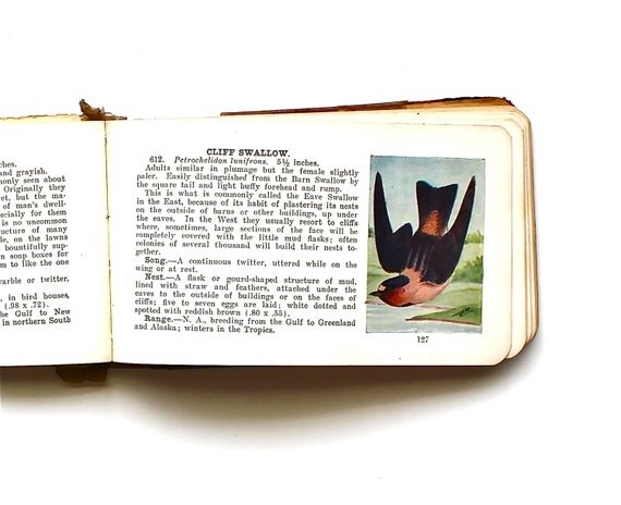 Birds of a Feather - Antique Book - Antique Field Guide Book - Antique Bird Book