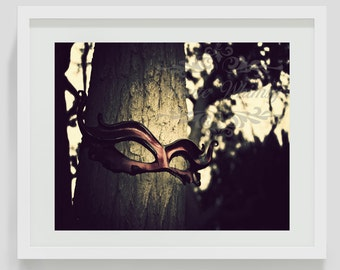 The Watcher in the Woods whimsical photography, nature photography