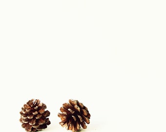 Two Pinecones - rustic nursery autumn winter decor christmas gift earthy love natural pinecone Fine Art Print 20x20