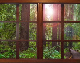Wall mural window, self adhesive, forest window view-3 sizes available-California Redwoods- Muir Woods - free US shipping
