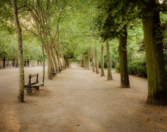 Paris Photography Luxembourg Garden Photo Park Photograph Spring Print Dreamy Trees Green  par58