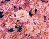 gift under 50 Flower photography mum photograph retro fall wall art autumn photo light pink mums nursery decor fall home decor 8x8