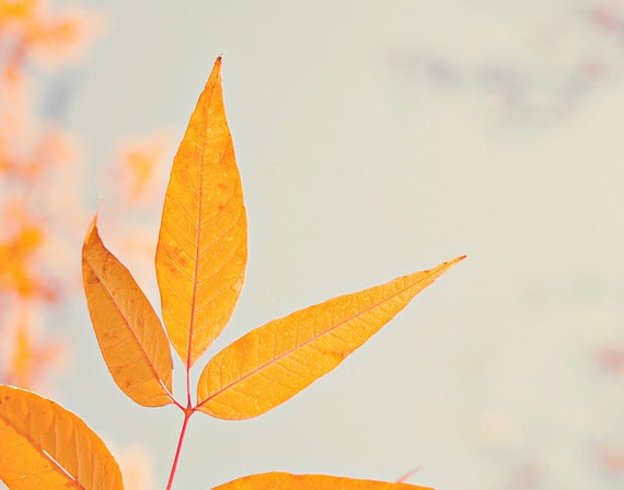 gift under 50 Autumn photography 11x14 fall decor art print botanical photo orange wall art leaves fine art macro light blue