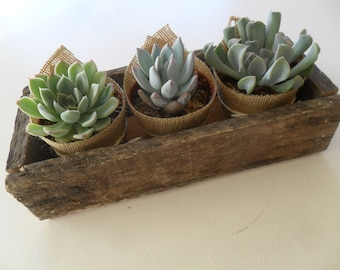 Succulent Centerpiece, Burlap, Rustic Weddings, Centerpiece, Barn Wedding, Hostess Gift, Special Events, Housewarming Gift