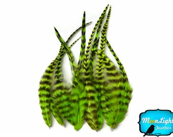 Rooster Feathers, 1 Dozen - SHORT GREEN Grizzly Rooster Feathers : 838