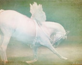 White horse with angel wings Fantasy surreal whimsical 8x12 fine art photography - Angel Horse