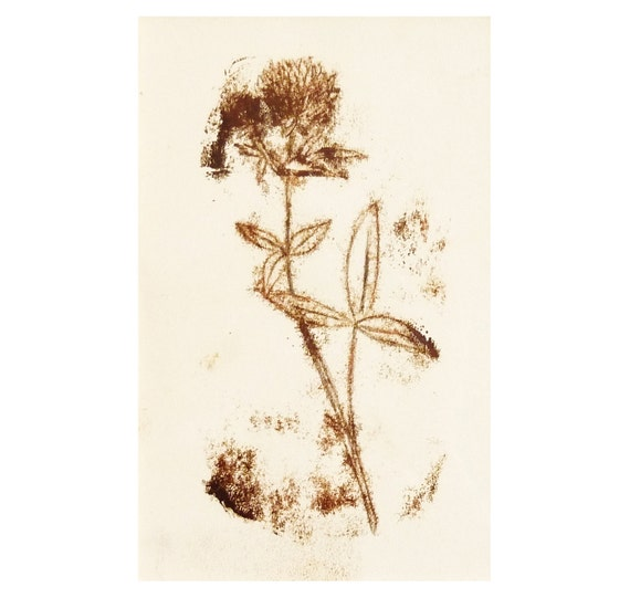 Illustration, Original, Original art, Flower Art, Botanical, Wall Decor, Wall art, Nursery Art, Ink Drawing, Monotype, Sepia art, Clover