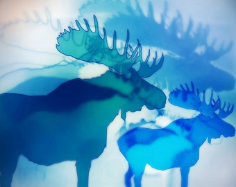moose 11x 14 PRINT