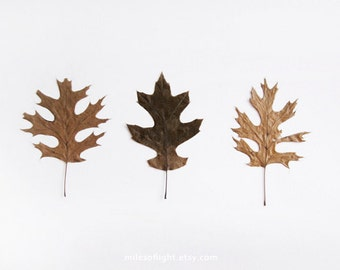 Autumn Leaves - 8x10. Fine Art Photographic Natural History Print. Minimal simple style. Natural Home Decor. Indoor garden botanical