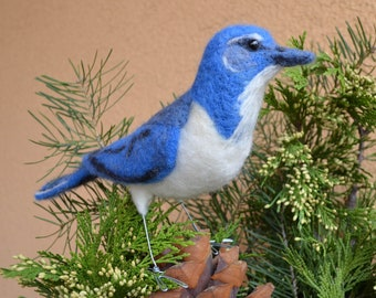 Mr. Western Scrub Jay, needle felted bird sculpture