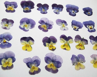 Small 1 inch Pressed Pansies Crafting Supplies