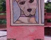 Pit bull Aceo