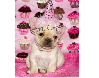 French Bulldog Birthday Cards - Set of 2 Cards